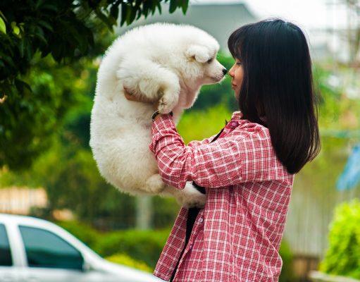 Honden vermenselijken