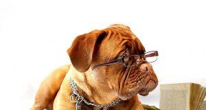 Indeling honden