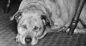 Zorgen voor een oude hond