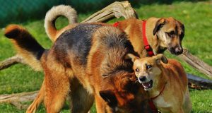 Positie van je hond in een roedel