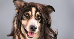 Verharing bij honden