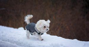 Wintertips voor je hond