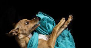 vernielen hond