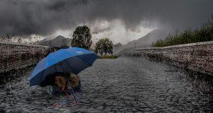 hond in de regen