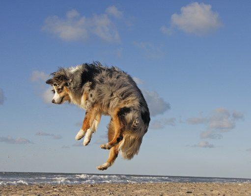 energie van je hond