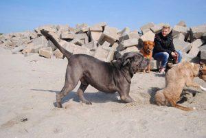 Tweede kans voor honden 3