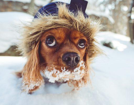 Sneeuw kito
