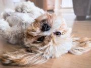 Grappig hond