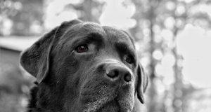 stress bij honden